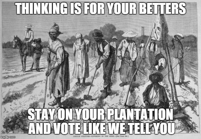 Image 2 plantation