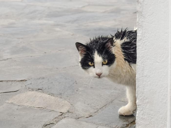 cat-2920718_1920
