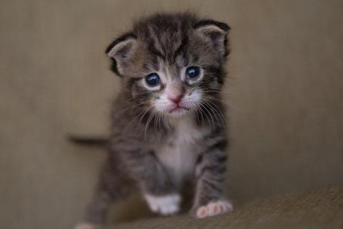 kitten-2482743_1920