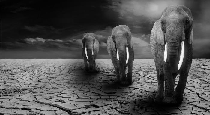 elephant-590020_1920