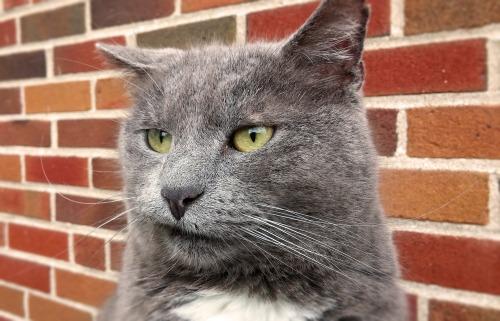 cat-2483826_1920