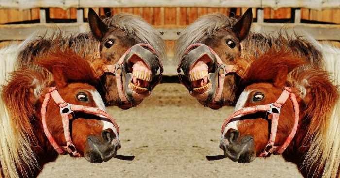 horses-1396651_1920