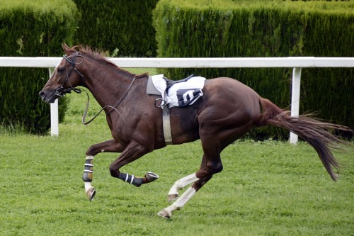 horse-racing-1577291_1280