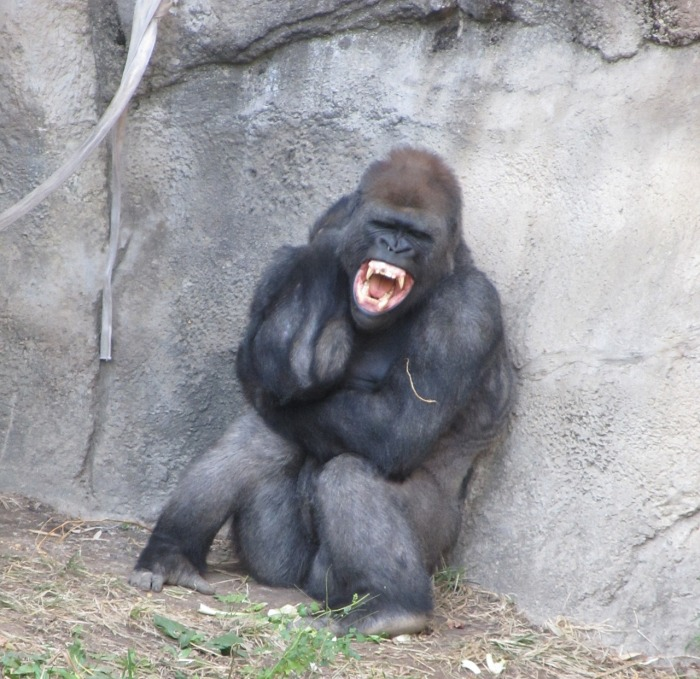 angry-gorilla-2114385_1280