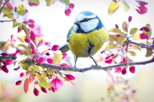 spring-bird-2295434
