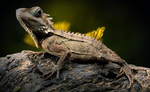 lizard-2427248_1920