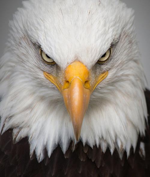 eagle-2045655_1920