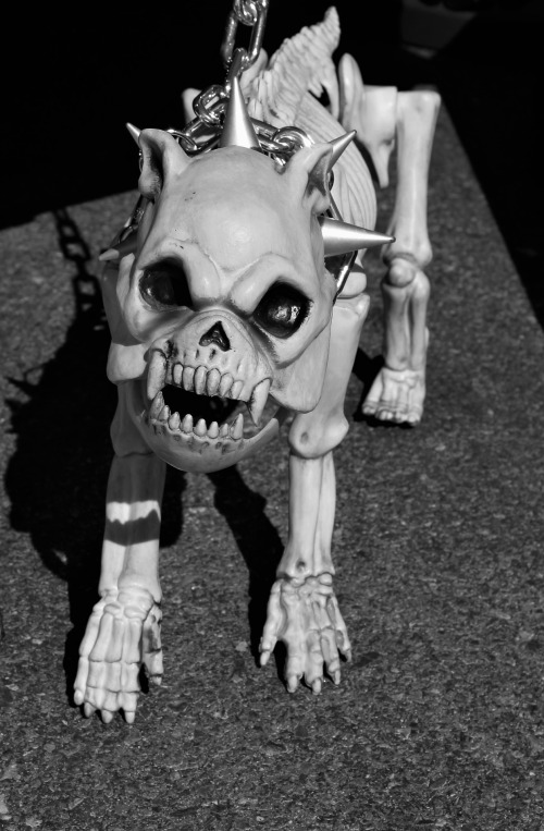 skeleton-dog-1784681_1920