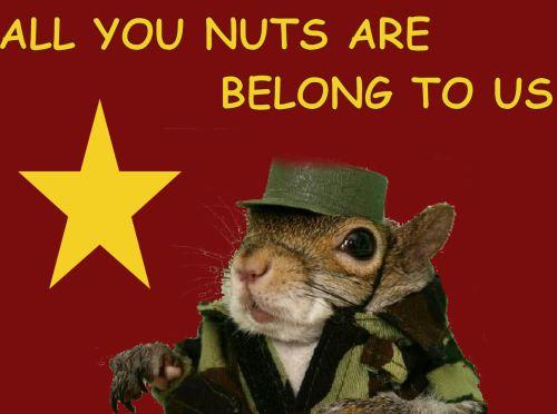 squirrelcastro