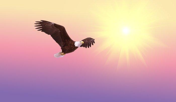 bald-eagle-521492_1920(1)