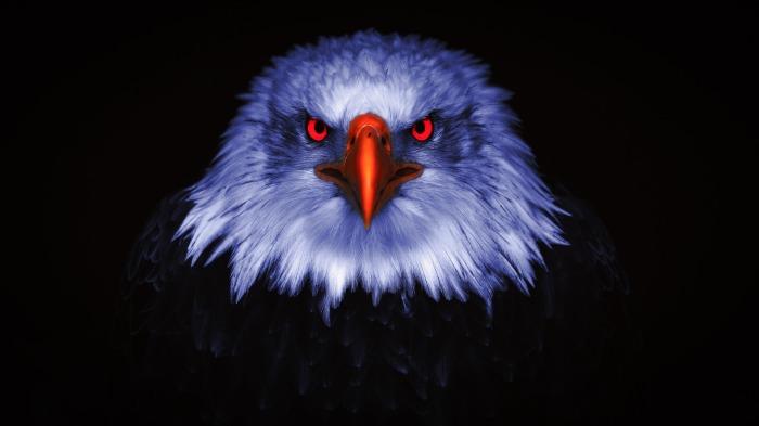 eagle-4971638_1920