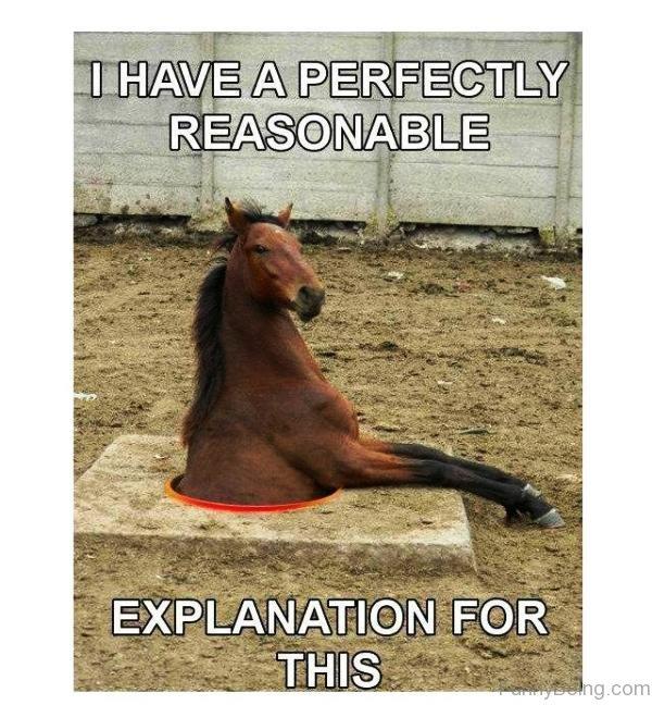 horse explanation
