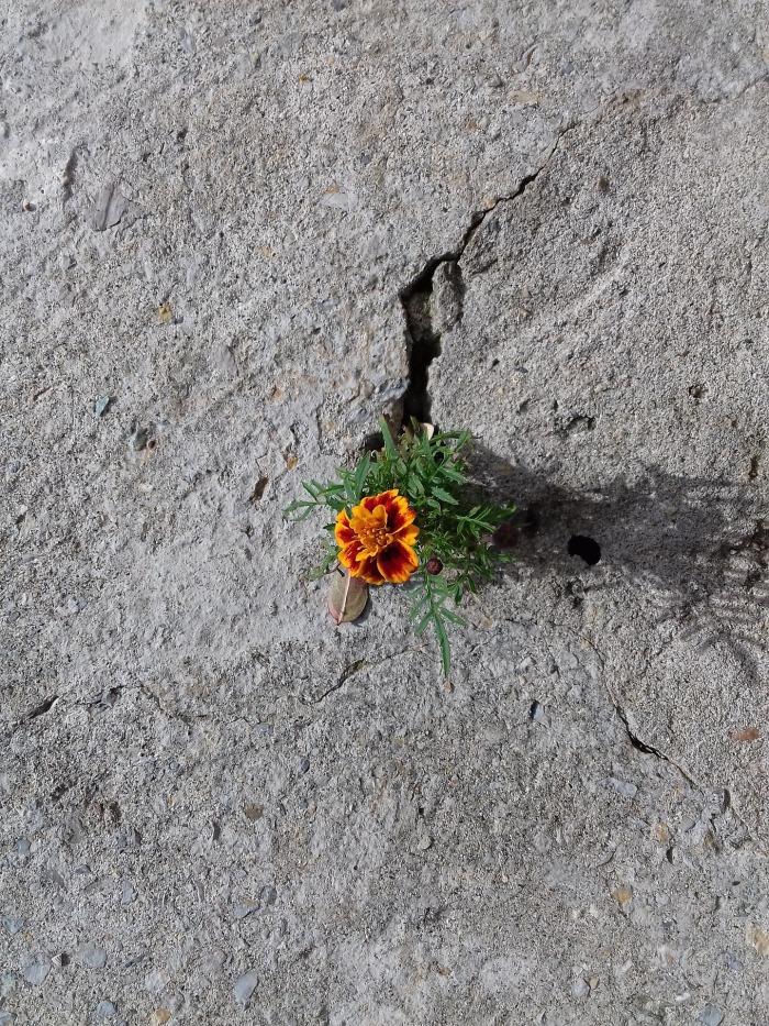 perseverance-5011204_1920