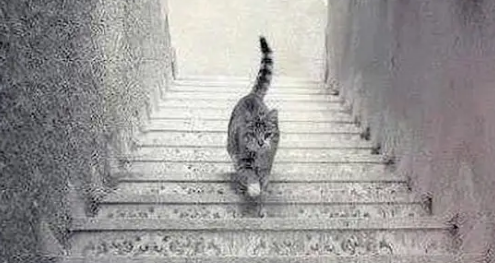 Screenshot_2020-07-01 No one on the internet can figure out whether this cat is going up or down these stairs
